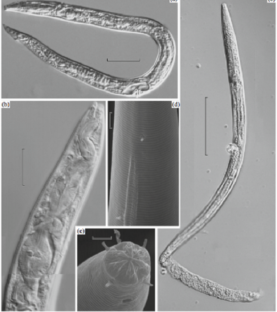 Scientist Discovered Worms existing for 40, 000 years in Siberia | US.tnbclive.com