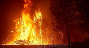 Missing Toll Crosses 600 in California Wildfire, Trump Will Visit the Victims