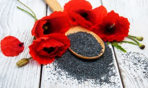 your Diet, Health Benefits of Poppy Seeds | tnbclive.com