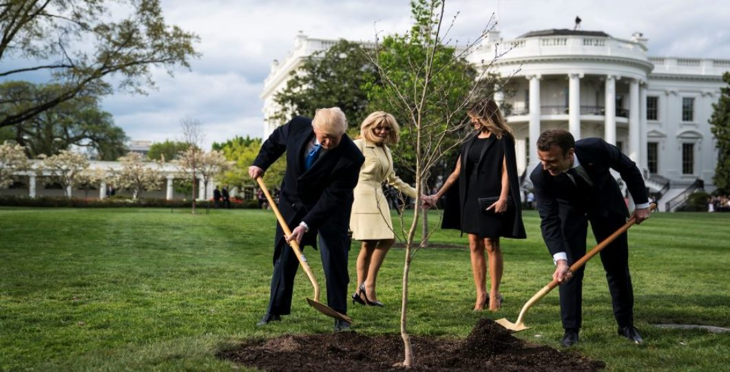 French President Sends A Replacement 'Friendship' Oak Tree To The US President