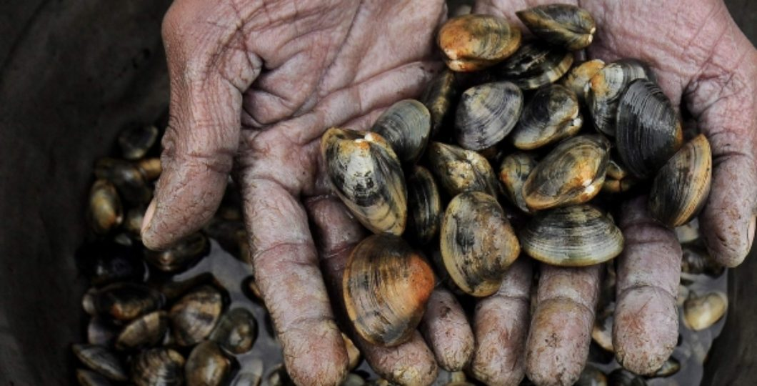 About Half a Million of Mussels Found Dead on News Zealand Coast