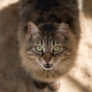 COVID-19 in Pets: Two Cats in New York Tested Positive for Coronavirus