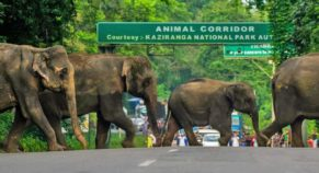 Assam flood blow yet again takes a toll on humans and animals this year.