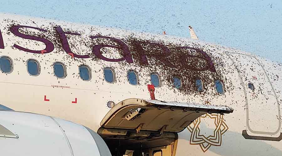 A Swarm of bees delayed flights by an hour
