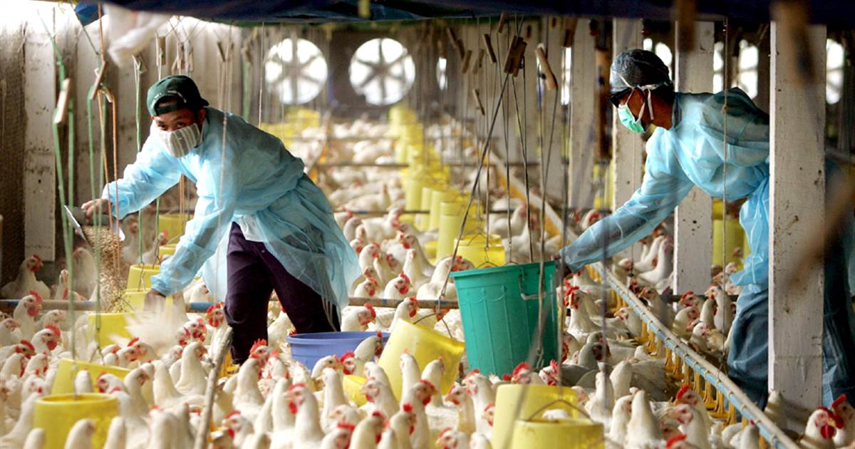 Bird Flu outbreak, Centre Sends Teams To Kerala, Haryana